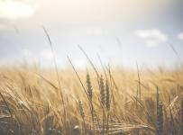 Objavljen natječaj za razvoj nepoljoprivrednih djelatnosti u ruralnim područjima vrijedan 120 milijuna kuna